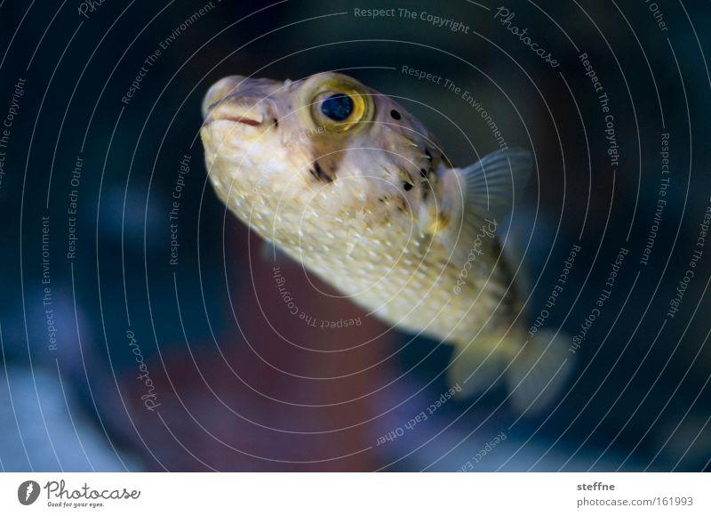 kindchenschema schön Meer Fisch niedlich Freundlichkeit