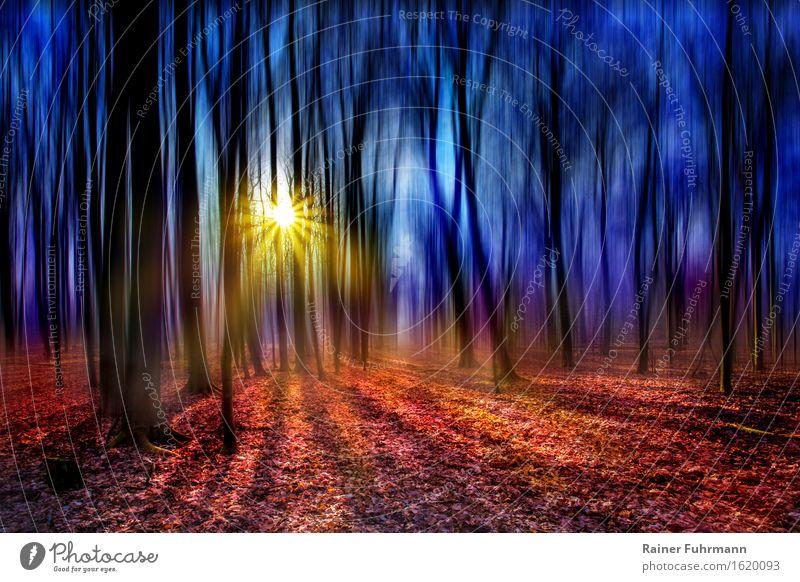 """ein Märchenwald im Gegenlicht Umwelt Sonne Sonnenlicht Frühling Schönes Wetter Wald träumen hell verrückt Romantik schön """"Schatten helles blenden einsam Zauber"""""""