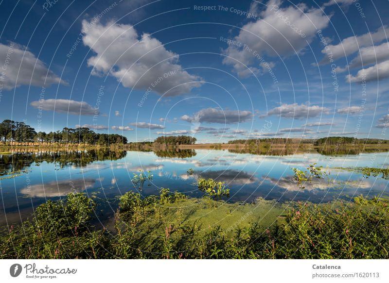 Wolken ziehen vorbei Wassersport Schwimmen & Baden Rudern Landschaft Pflanze Luft Himmel Horizont Herbst Schönes Wetter Wildpflanze Wasserpflanze Baum Seeufer