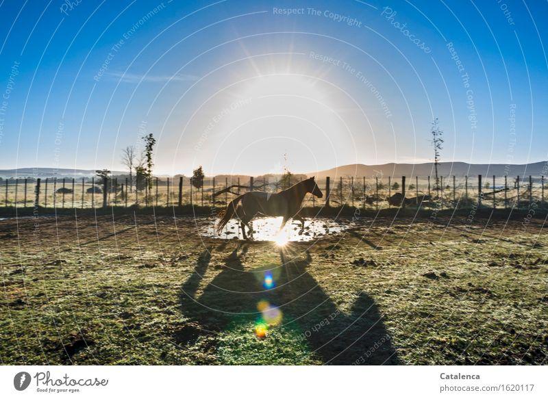 Sonnenlicht Landschaft Pflanze Tier Luft Wasser Schönes Wetter Wiese Feld Hügel Pferd 1 Bewegung glänzend gehen laufen leuchten ästhetisch heiß hell nachhaltig