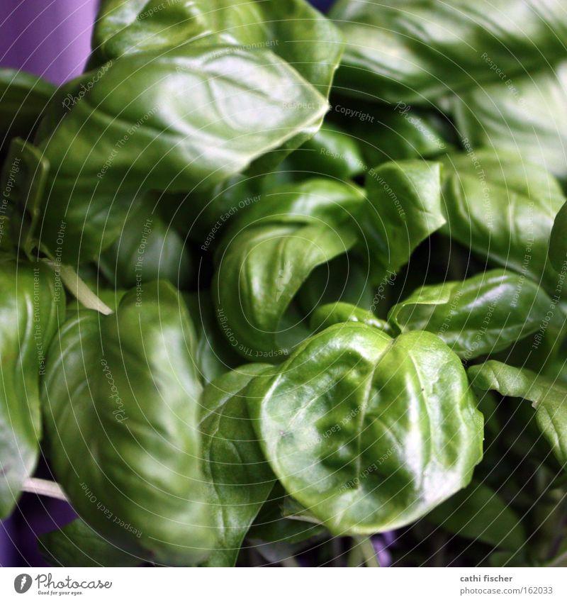 dschungel Natur grün Pflanze Blume Farbe Wiese Küche violett Gemüse Kräuter & Gewürze Botanik Grünpflanze Basilikum Pesto