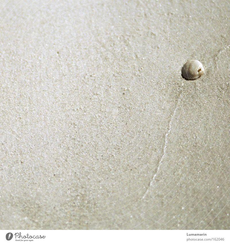 Insulaner Sommer Strand Ferien & Urlaub & Reisen ruhig Einsamkeit Sand Linie Küste Erde einfach natürlich Muschel vergessen dezent friedlich körnig