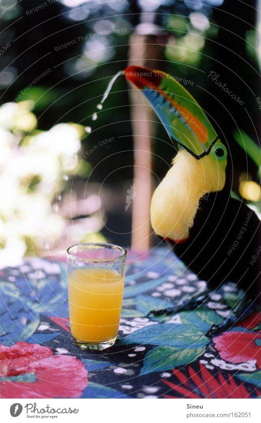 Hohes C Farbfoto mehrfarbig Nahaufnahme Licht Schatten Schwache Tiefenschärfe Tierporträt Frucht trinken Saft Glas Gesundheit Sommer Schönes Wetter Terrasse