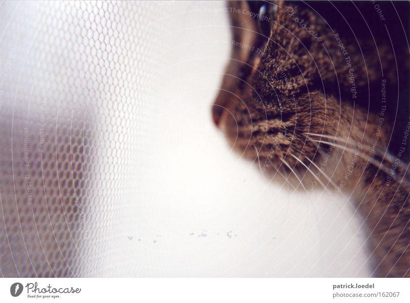 Geduld Tier Fenster Katze warten Wohnung elegant sitzen Hoffnung Sicherheit Netzwerk Aussicht Tiergesicht Netz beobachten Fell Zoo