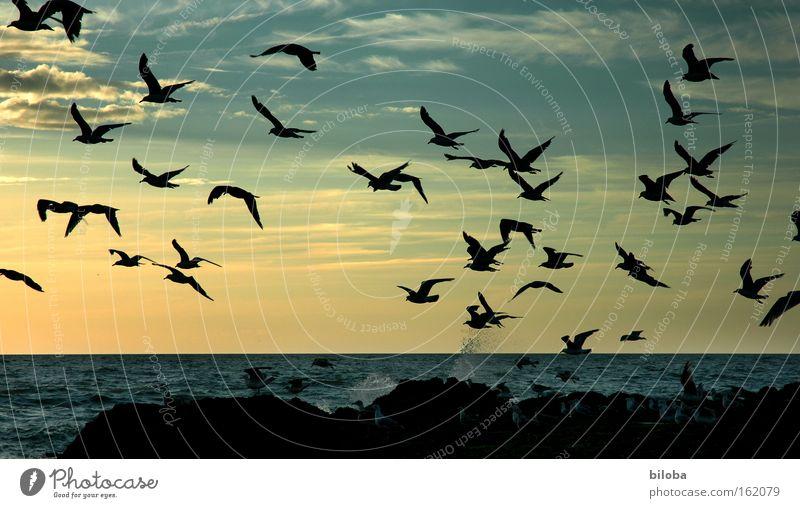 Nordseegeschwader Wasser schön Strand Ferien & Urlaub & Reisen Ferne Freiheit Menschengruppe Vogel Küste Horizont Luftverkehr mehrere Tiergruppe Sonnenuntergang