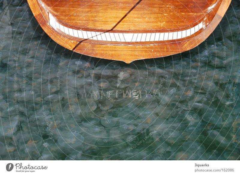 Quallen Wasser grün See Wasserfahrzeug Segeln Ostsee Segelboot Heck Plage