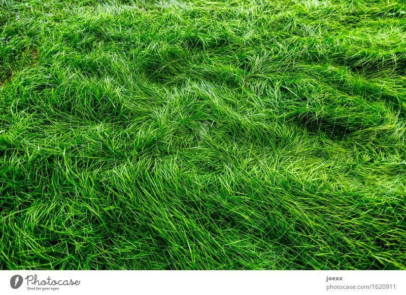 Kuschelgras Garten Wiese Wachstum weich grün Bewegung Natur Farbfoto Außenaufnahme Menschenleer Kontrast