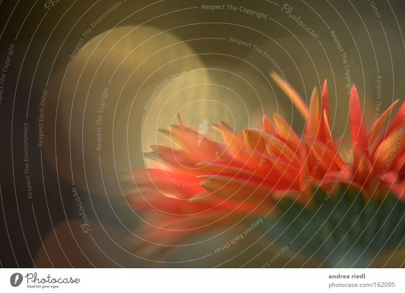 be inspire Natur Pflanze Erholung Umwelt Gefühle Glück Blüte träumen Energiewirtschaft Erfolg Lust Inspiration Esoterik