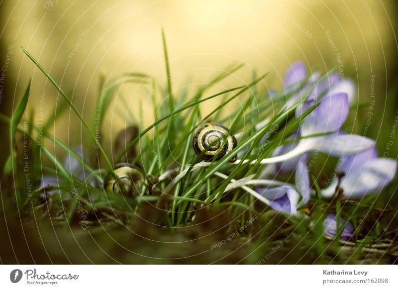alles auf anfang! Farbfoto Außenaufnahme Nahaufnahme Makroaufnahme Textfreiraum oben Licht Schwache Tiefenschärfe Froschperspektive Tierporträt Natur Pflanze