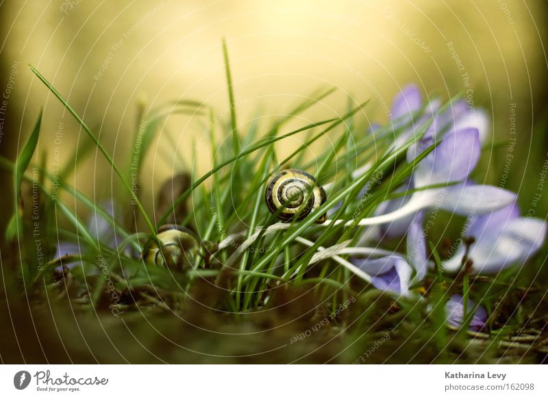 alles auf anfang! Natur Blume Pflanze Tier Blüte Gras Frühling Erde Rasen Bodenbelag Leidenschaft Mut Schnecke Vorsicht Ausdauer fleißig