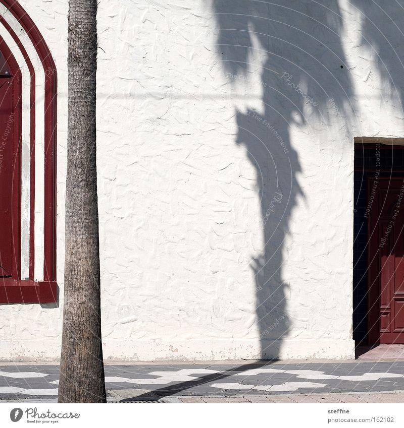 unter palmen Palme Schatten Wand rot weiß Sonne Tür Putz heiß Ferien & Urlaub & Reisen Spanien Spanisch Florida Tampa USA Detailaufnahme Sommer Ybor