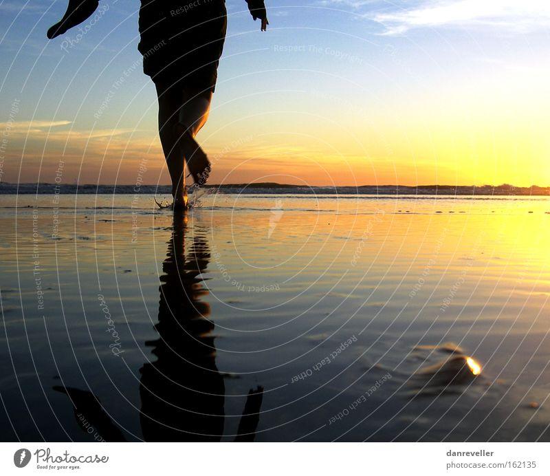 Der Sonne entgegen Sonnenaufgang Meer Wasser Strand laufen Spiegel Reflexion & Spiegelung Horizont Wolken Muschel blau gelb Schatten Küste