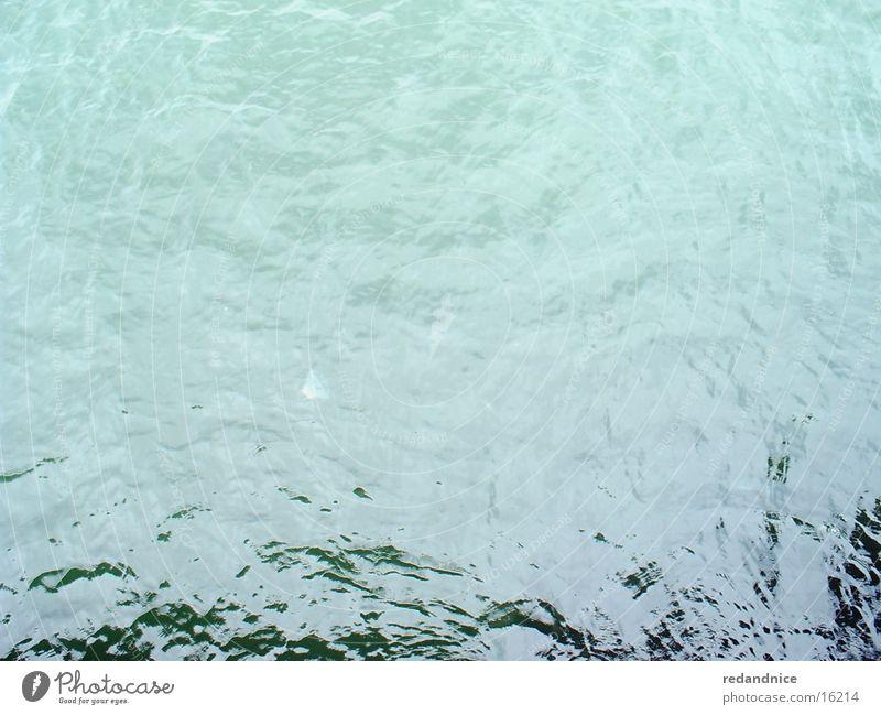 die ostsee Qualle Meer Wasser Ostsee