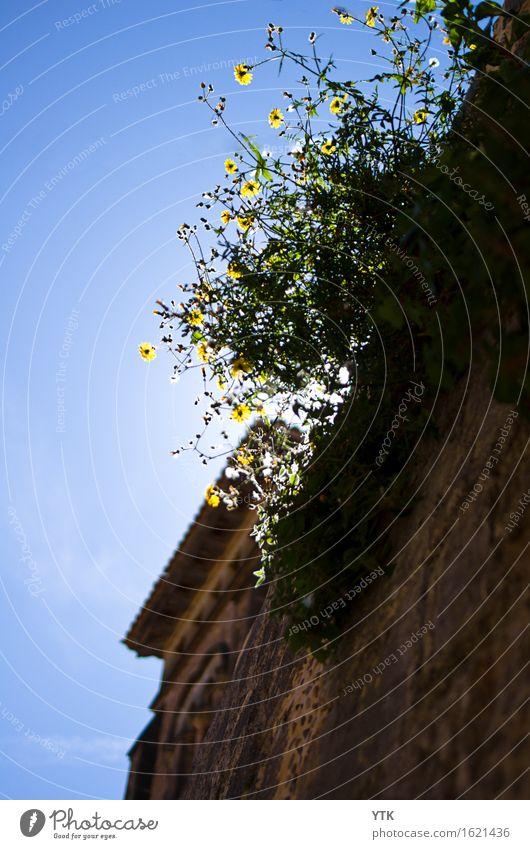 Frühlingserwachen_südländisch Umwelt Pflanze Himmel Wolkenloser Himmel Sonne Sonnenlicht Klima Wetter Schönes Wetter Blume Blatt Blüte Grünpflanze Wildpflanze