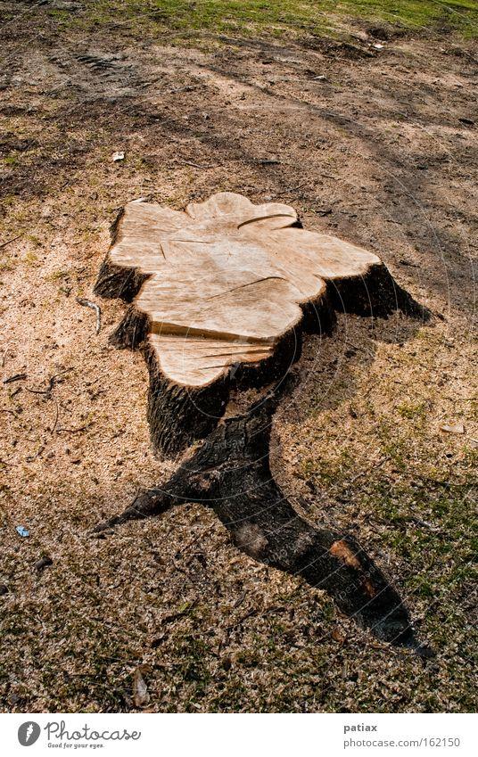 Stadtbaum Natur Baum Baumstamm Österreich Wien Rest Waldboden Waldlichtung Baumstumpf Jahresringe Totholz Wurzelholz