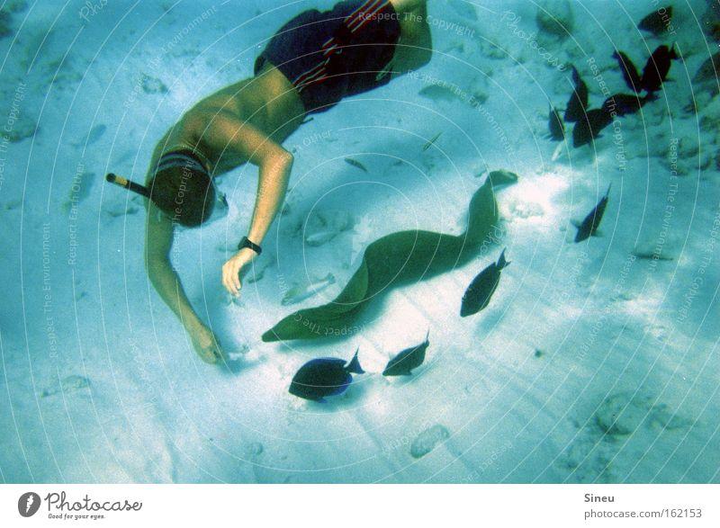 Lockvogel Farbfoto Unterwasseraufnahme Oberkörper Taucher Meer Wassersport tauchen Mensch maskulin 1 Sand Badehose Tier Wildtier Fisch Schwarm atmen füttern