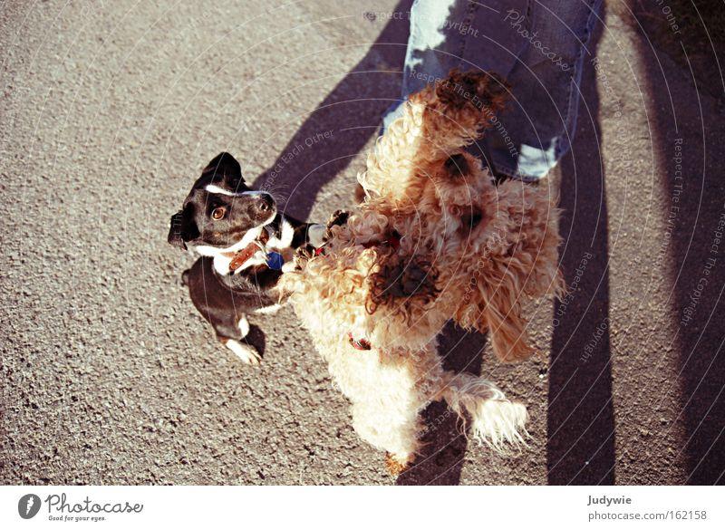 ICH will das Leckerlie ! Farbfoto Außenaufnahme Tag Spielen Sportveranstaltung Freundschaft Tier Hund kämpfen Konkurrenz betteln fordern Säugetier Belohnung