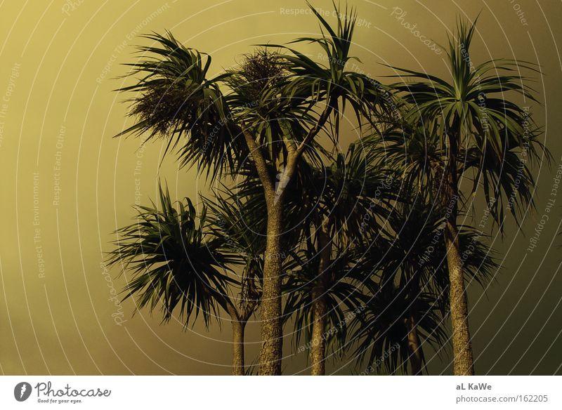 Isle of Ireland Palme Republik Irland Sonnenuntergang Dämmerung Baum Insel Sonnenlicht Wind Schönes Wetter Ferien & Urlaub & Reisen Küste Shannon Clare