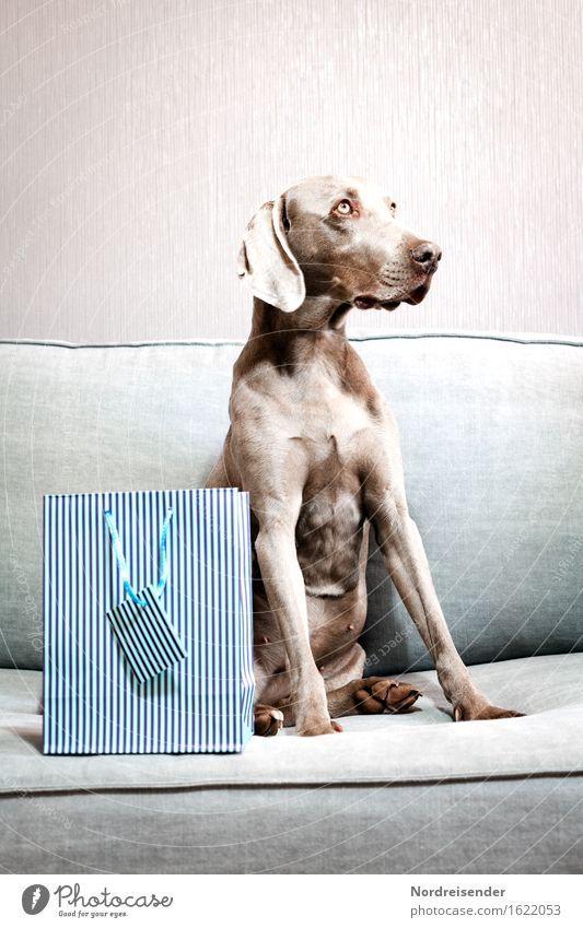 1500 ..... da habe ich was für dich.... Spielen Sofa Raum Wohnzimmer Feste & Feiern Tier Haustier Hund Verpackung beobachten Häusliches Leben Coolness schön