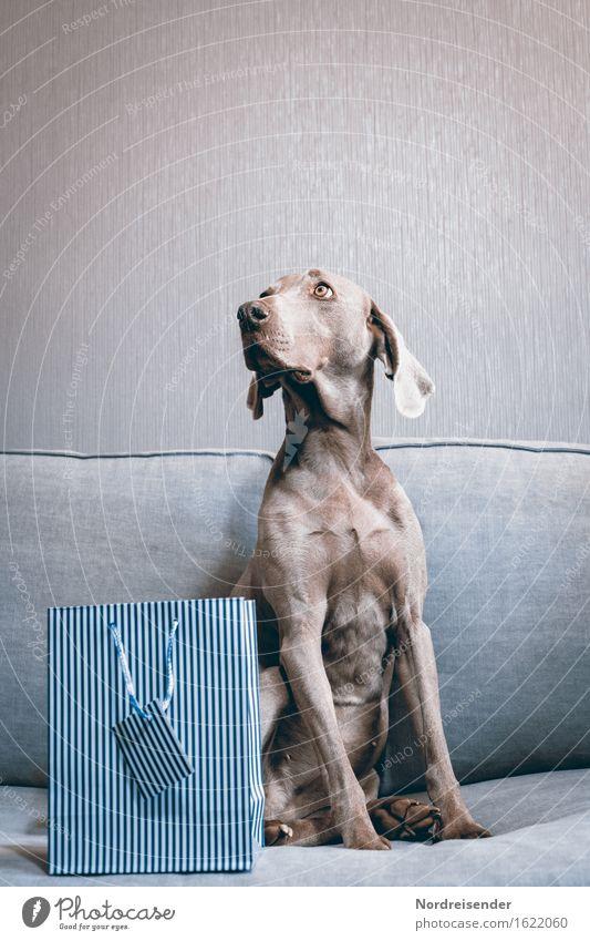 Für dich..... Lifestyle kaufen elegant Tier Haustier Hund 1 Freundlichkeit Fröhlichkeit Glück schön Vertrauen Geborgenheit Tierliebe Treue Sofa Geschenk