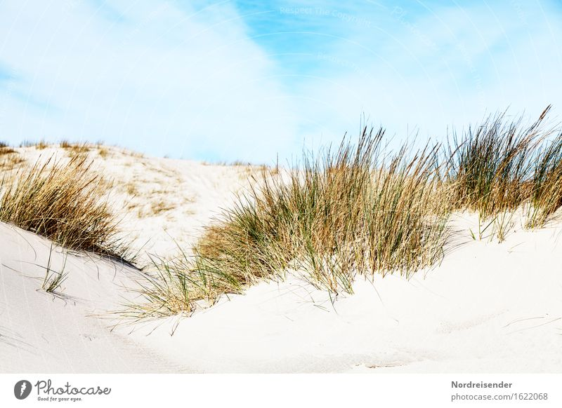 Dünengras Ferien & Urlaub & Reisen Sommer Sommerurlaub Sonne Strand Meer Natur Landschaft Sand Himmel Wolken Schönes Wetter Pflanze Gras Nordsee Ostsee