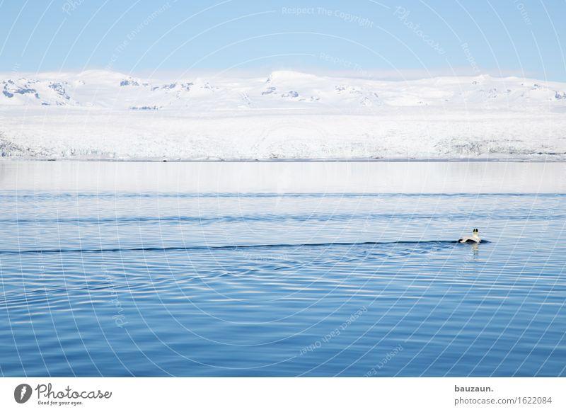 der tag der toten ente. Himmel Natur Ferien & Urlaub & Reisen Wasser Meer Landschaft Tier Ferne Winter Umwelt Schnee Freiheit Schwimmen & Baden See Vogel