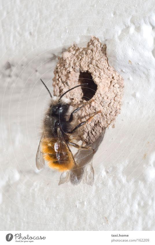 Hummelloch Natur Freude Tier Haus Wand Glück Arbeit & Erwerbstätigkeit Wohnung fliegen Fröhlichkeit bedrohlich Ziel Schönes Wetter Insekt Biene Leidenschaft