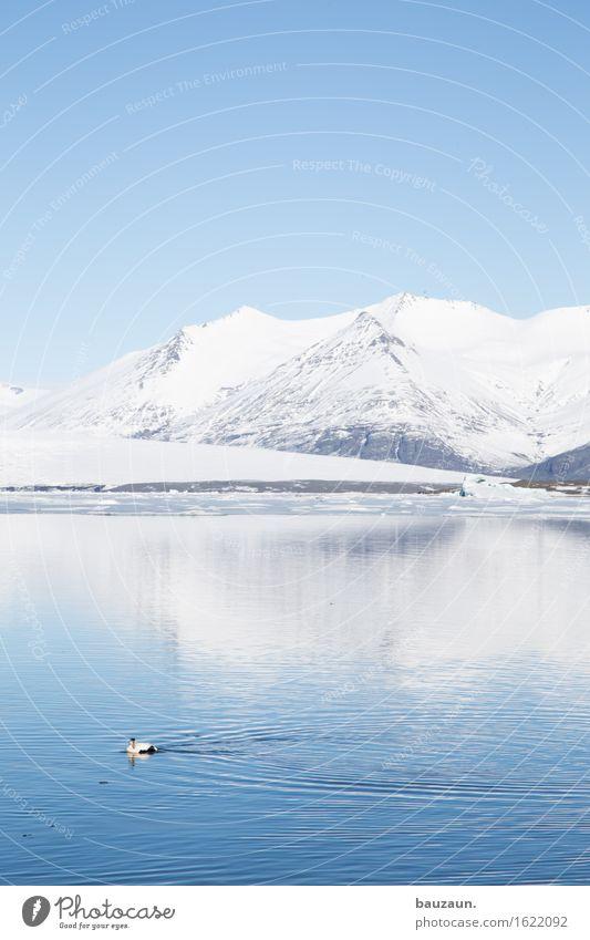 tag. Natur Ferien & Urlaub & Reisen Wasser Meer Landschaft Tier Ferne Winter Umwelt Schnee Freiheit Schwimmen & Baden See Vogel Tourismus Eis
