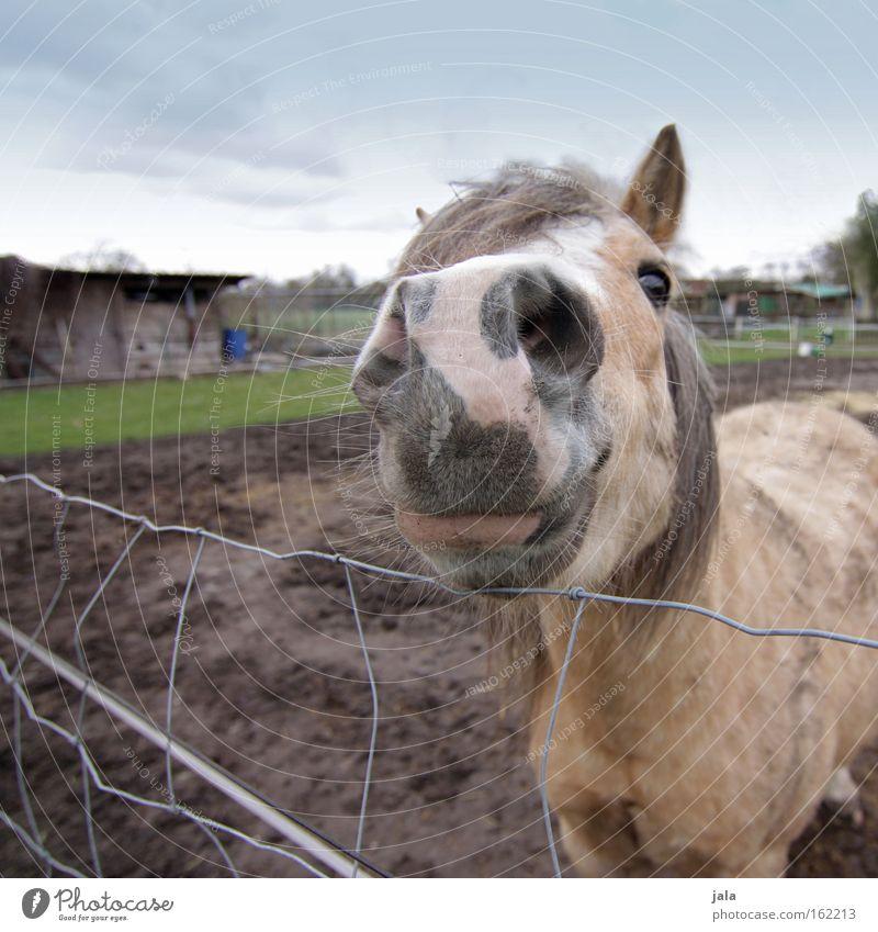 """mein """"kleiner onkel"""" Tier Wiese Pferd Weide Säugetier füttern gefleckt Reiten Mähne Streicheln"""