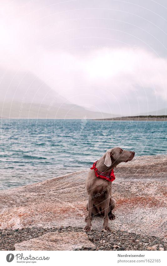 Abgelenkt.... Freizeit & Hobby Ausflug Natur Landschaft Urelemente Luft Wasser Gewitterwolken schlechtes Wetter Regen Felsen Berge u. Gebirge Küste Meer Tier
