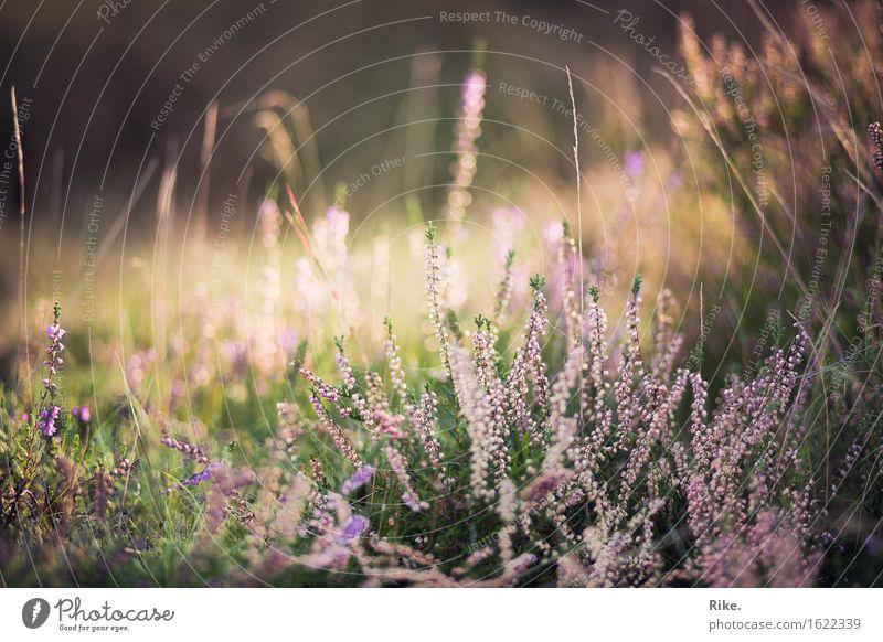 Moment. Natur Pflanze schön Sommer Blume Landschaft Umwelt Frühling Herbst Wiese natürlich Gras Gesundheit Garten Idylle Blühend