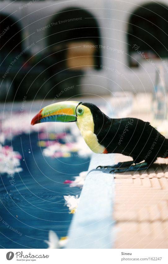Der Wassertrinker II blau grün Pflanze Sommer Tier ruhig schwarz Erholung gelb Wärme Vogel orange Schwimmen & Baden Wassertropfen Schwimmbad