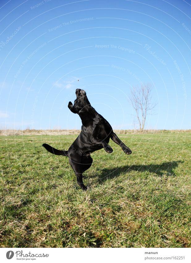 Leichte Übung Hund Freude Spielen Bewegung springen Gesundheit Bildung Konzentration Fitness sportlich Haustier Berufsausbildung hüpfen üben gehorsam Tiertraining
