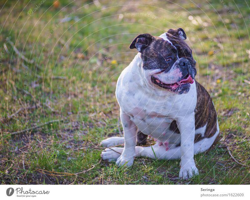 Moppi Tier Haustier Hund Tiergesicht 1 Blick sitzen Hundeschnauze Farbfoto Gedeckte Farben mehrfarbig Außenaufnahme Nahaufnahme Detailaufnahme Menschenleer
