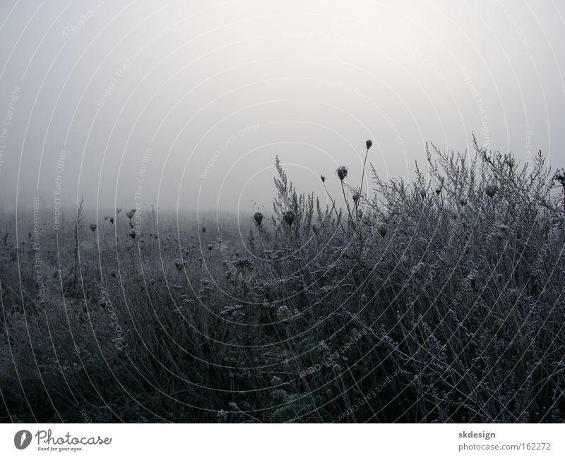 Frostige Brache Winter Wiese grau Nebel Frost Raureif schlechtes Wetter Morgennebel Doldenblüte Triest Brachland