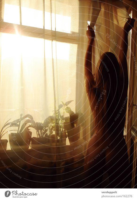Frau Blume gelb Akt nackt Fenster Häusliches Leben Gardine Blumentopf Silhouette Mensch Schatten