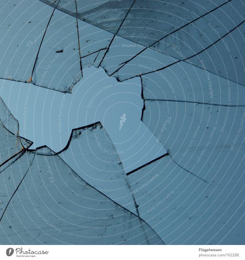 Mücke fliegt gegen Scheibe - Scheibenkleister Fensterscheibe Autofenster Scherbe Stechmücke Insekt kaputt Kollision Unfall Steinschlag Riss Loch crash