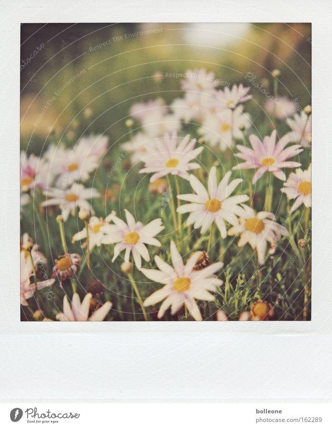 Der Frühling kann kommen... Blume grün Pflanze Ferien & Urlaub & Reisen Leben Wiese Blüte Polaroid Afrika Blühend Erinnerung Südafrika