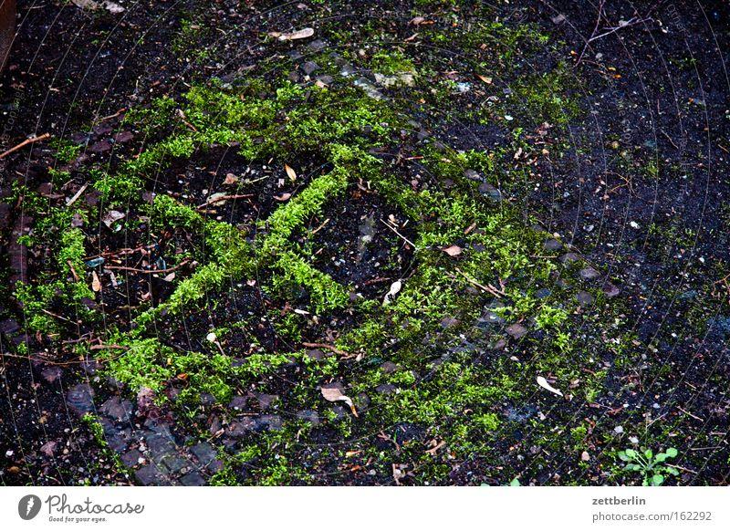 Gulli alt grün Boden Vergänglichkeit verfallen Kreuz Moos Kies wählen Gully Wahlen Zone Abwasser Gußeisen Kanalisation Industrialisierung