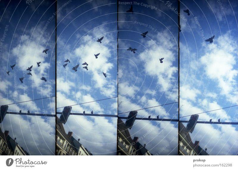 Kalle Marx ihm seine Tauben Himmel Stadt Freude Haus Wolken Lomografie Vogel fliegen Idylle Ampel Taube Abheben Schwarm