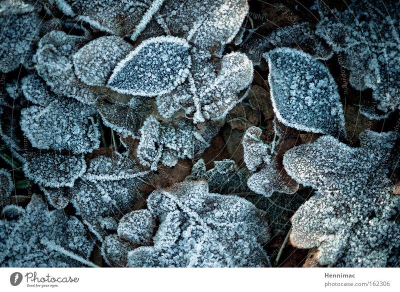 -1°. Natur blau schön Pflanze Blatt Winter ruhig dunkel kalt Herbst Traurigkeit braun Eis Boden Frost rund