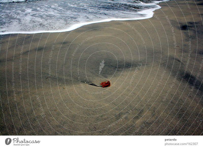 Hilfe, das Wasser kommt Strand Sand Sandkorn Wellen Algen Schaum Fußspur Meer See Einsamkeit rot Brandung Ebbe Flut Küste Erde Vergänglichkeit Mulde
