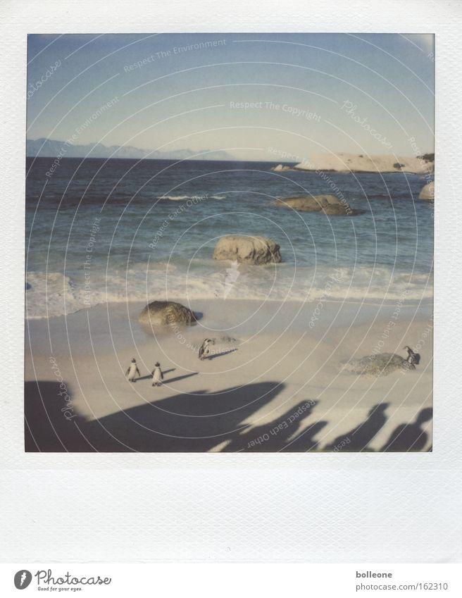 Wir sind klein und sehr gemein... Ferien & Urlaub & Reisen Meer Strand Pinguin Südafrika blau Tier Wellen Sommer Vogel kleines Volk