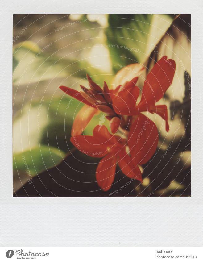 Da blüht uns was... Blüte rot Blühend Orchidee Südafrika Pflanze schön Natur traumhaft Sommer