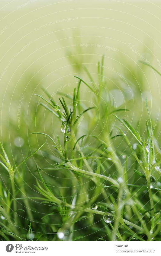 Dröpje Gras Wassertropfen Tropfen feucht nass frisch zart filigran grün schimmern glänzend Frühling träumen Konzentration