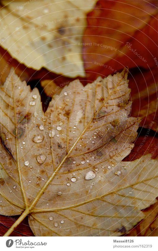 Herbstgewitter rot orange Wassertropfen Boden Blatt Regen