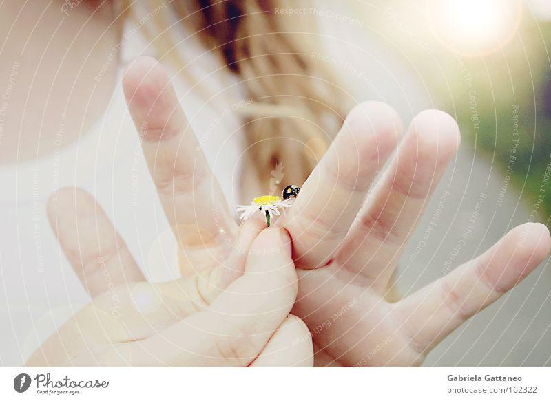 let the sunshine in Hand Mädchen Sommer Wind Kind zart Gänseblümchen sanft Käfer Vorsicht begegnen Insekt erdrücken