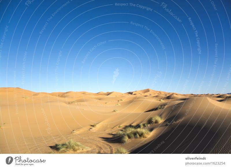 Sahara II Ferien & Urlaub & Reisen Ausflug Abenteuer Ferne Freiheit Sommer Sommerurlaub Umwelt Natur Landschaft Sand Himmel Wolkenloser Himmel Klima Klimawandel