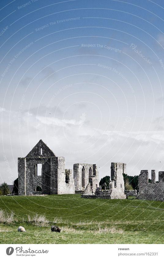 irland alt grün Wiese Wand Gras Mauer Landschaft Romantik Vergänglichkeit Burg oder Schloss verfallen Denkmal Vergangenheit Bauwerk Weide Ruine