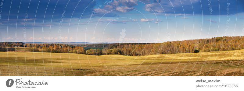 Sonnige Frühlingsfelder am Abend schön Sommer Natur Landschaft Luft Himmel Wolken Schönes Wetter Baum Gras Wiese Feld Wald Hügel Wachstum hell natürlich